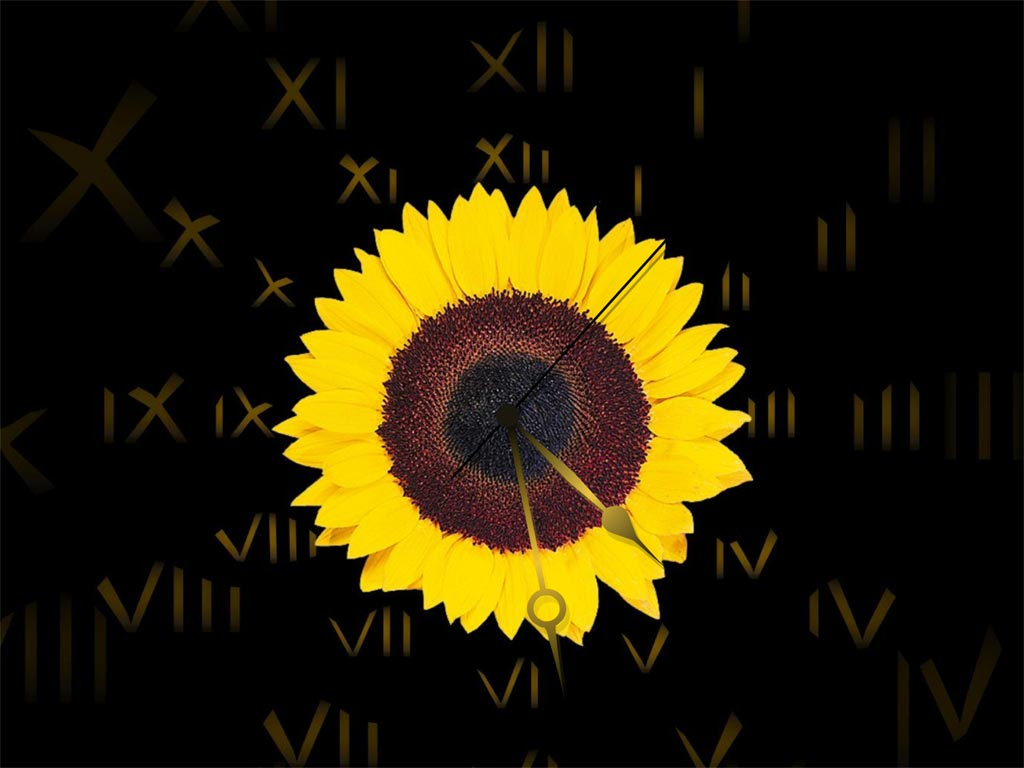Sunflower Clock ScreenSaver